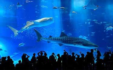 美麗海水族館設施內部照片